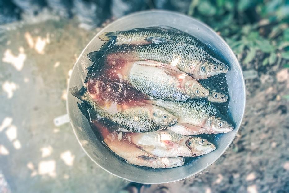 fish small.jpg